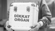 Organ, Tissue and Cell Transplant